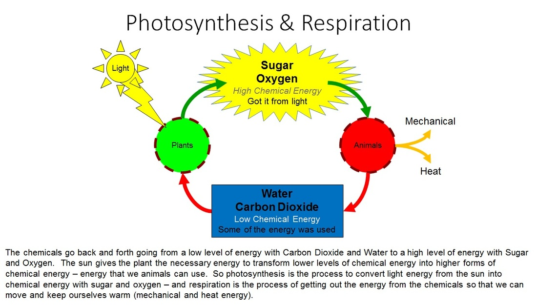 Photosynthesis  U0026 Respiration